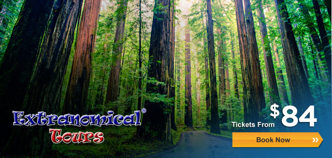 Muir Woods Expedition